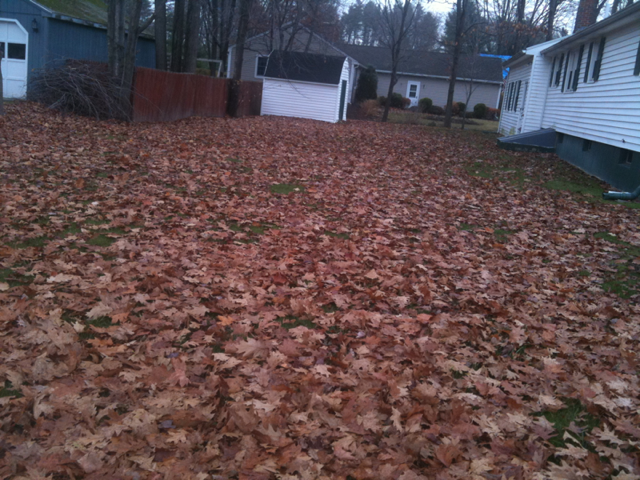 leaf-removal-before