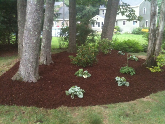Utilizing shade tolerant perennials in garden installation